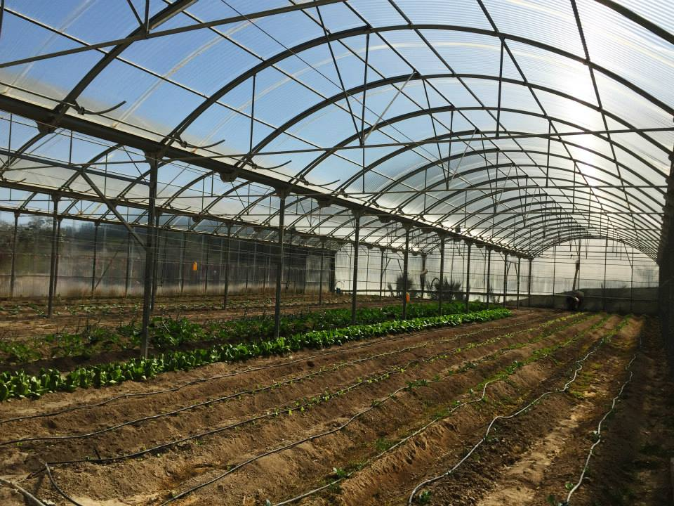 Make A Smile Greenhouse